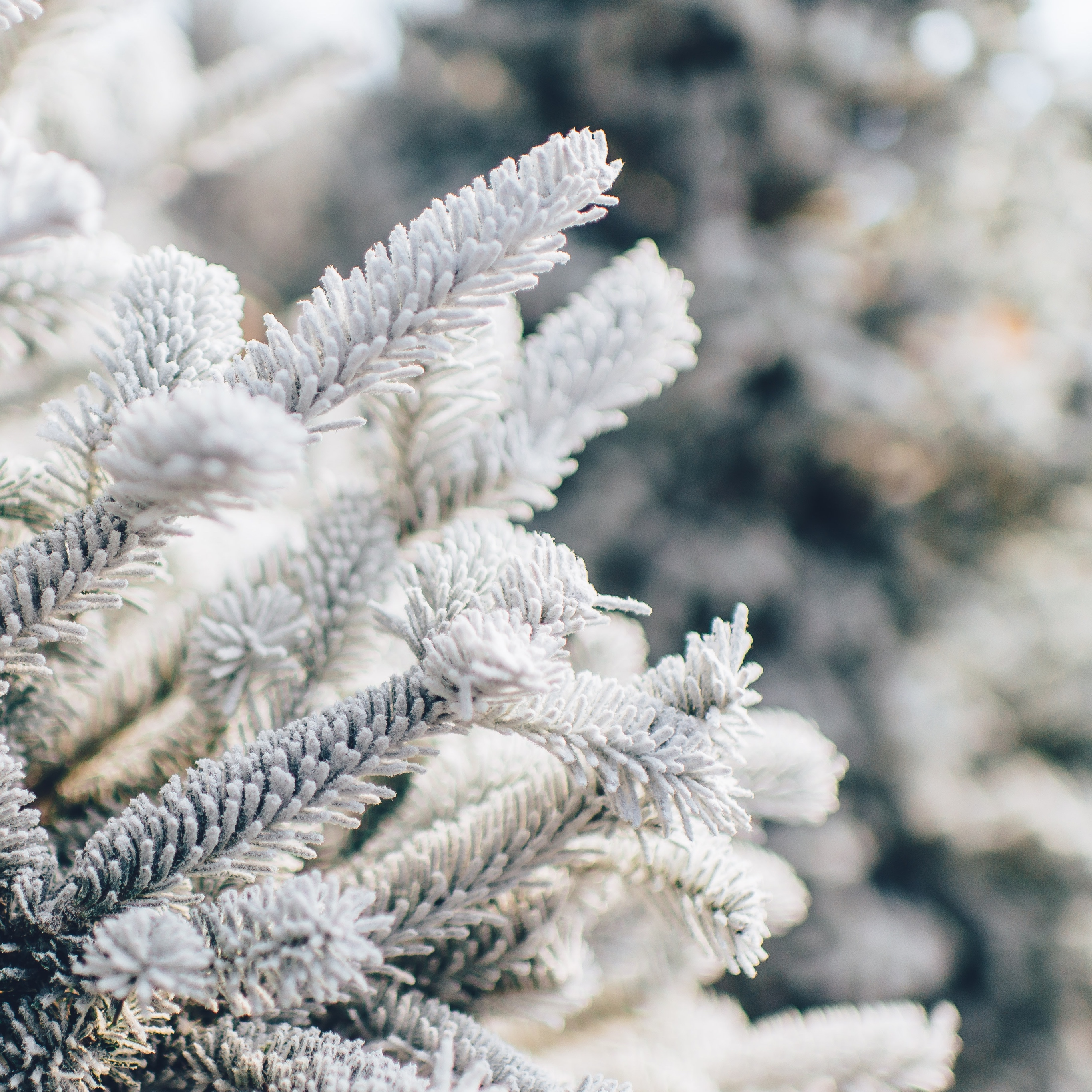 snow wallpaper evergreen idownloadblog unsplash ian schneider ipad